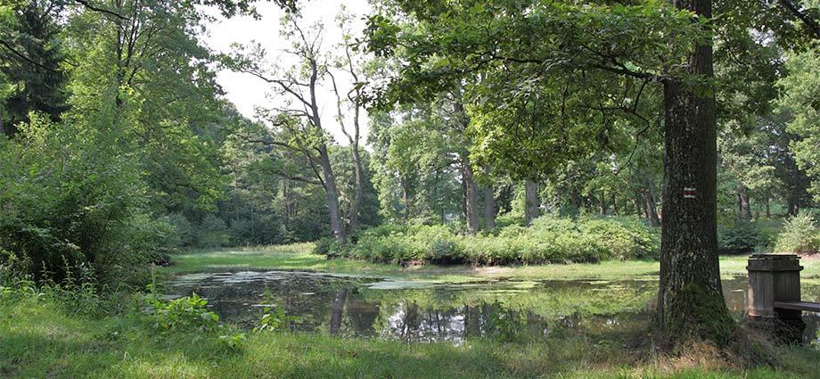 Naturlandschaft im Theresiental