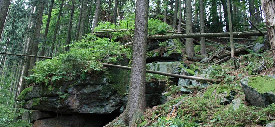Wald in Heilbrunn
